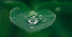 A leaf and droplet to represent greener architectural design.