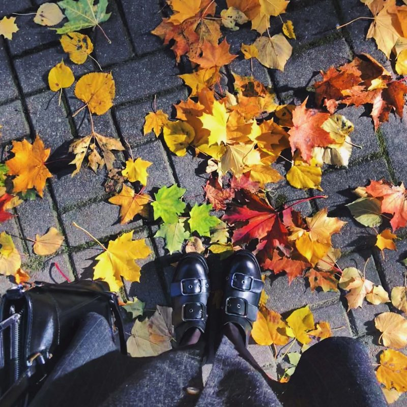 A picture depicting fallen autumn leaves to represent the facilities management work needed during the season.