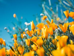 An image of yellow garden flowers to represent homebuyers increasingly looking towards garden space as a priority.